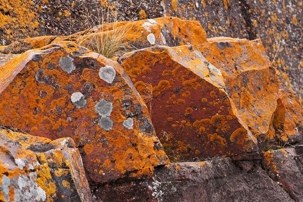We stay at Fenstad's Resort in Little Marais, Minnesota.  They are right on Lake Superior and in their bay are many large rocks covered with lichens.  This was an especially interesting group of rocks.  To me, the one in the middle looks like a painting.
