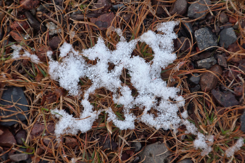 The ground was still warm and the snow was melting quickly.  That resulted in many lacy snow patterns on the grass.