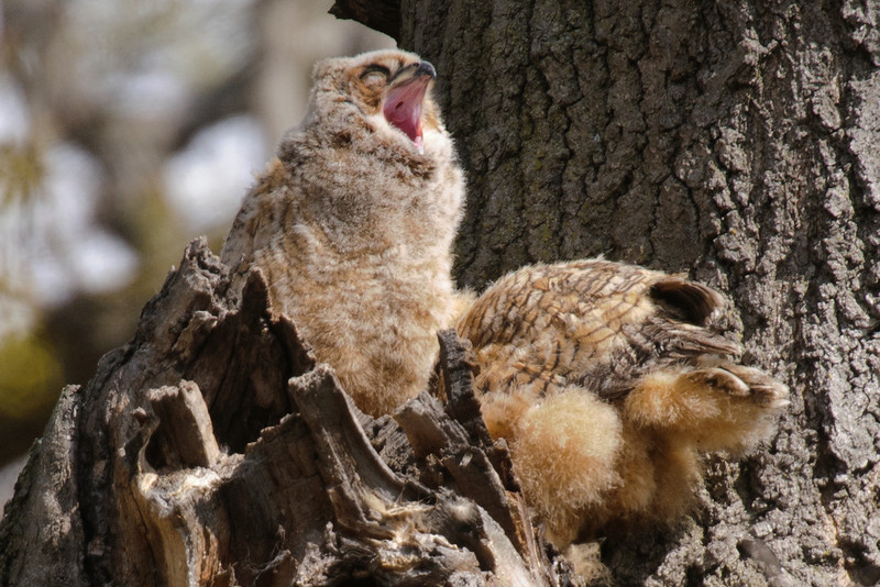 This big yawn makes me think it might be nap time.