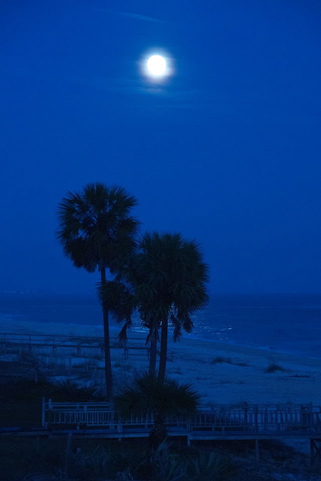 A full moon occurred shortly after we arrived in Florida.  I took this photo from the deck of the house we are renting on St. George Island.  I used a camera setting called Tungsten.  It emphasizes the blue tones and is especially effective for night photos like this.