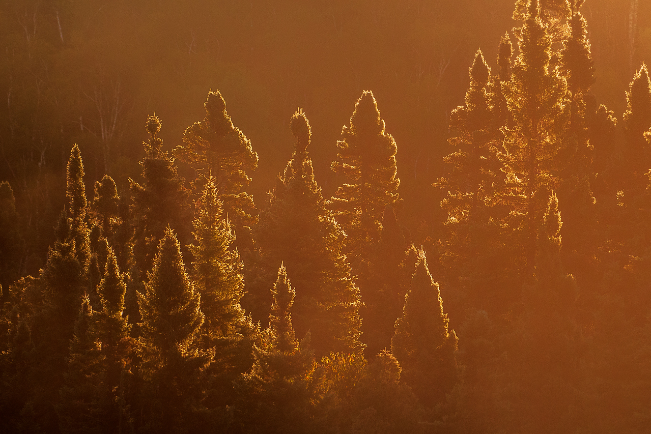 One of the first things you learn as a photographer is to have the sun at your back.  Well, sometimes that rule needs to be broken.  I was standing along one side of the Baptism River near Finland, Minnesota.  Heavy fog was lifting off the river and the sun was rising behind some pine trees on the other side.  That early, golden light lit up the outlines of the trees and I took one of my favorite photos of the whole trip.