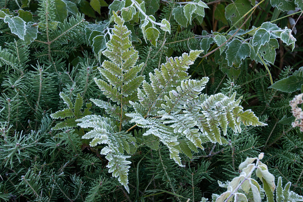 Even the ferns displayed a nice white coating.