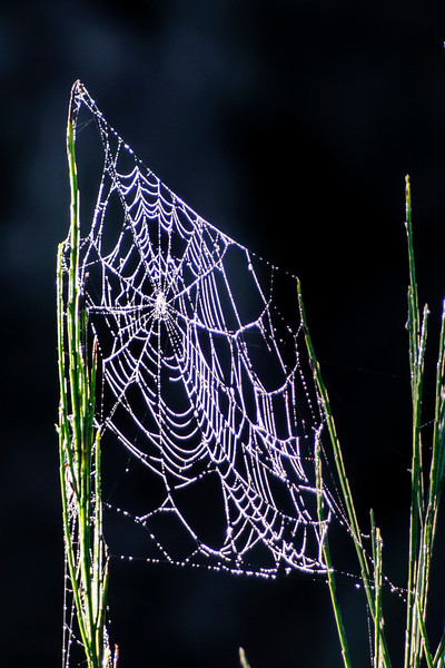 Perhaps this is an older web that has sustained some damage.  It looks like there are some holes in it.
