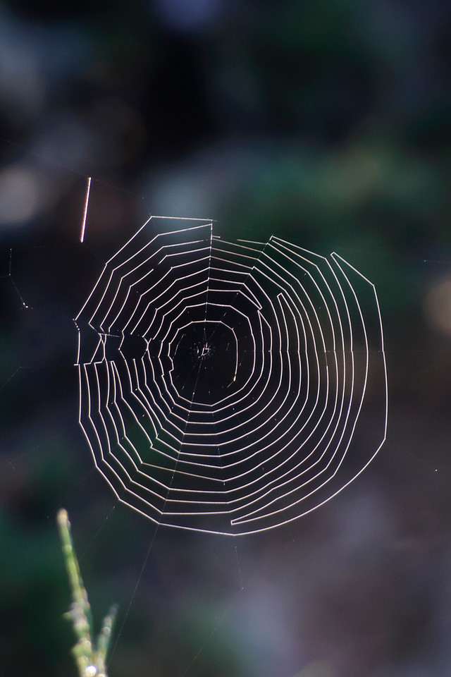 The silk threads holding this web to the nearby plants don't seem to be covered with water.  That makes the web appear to be floating in the air.