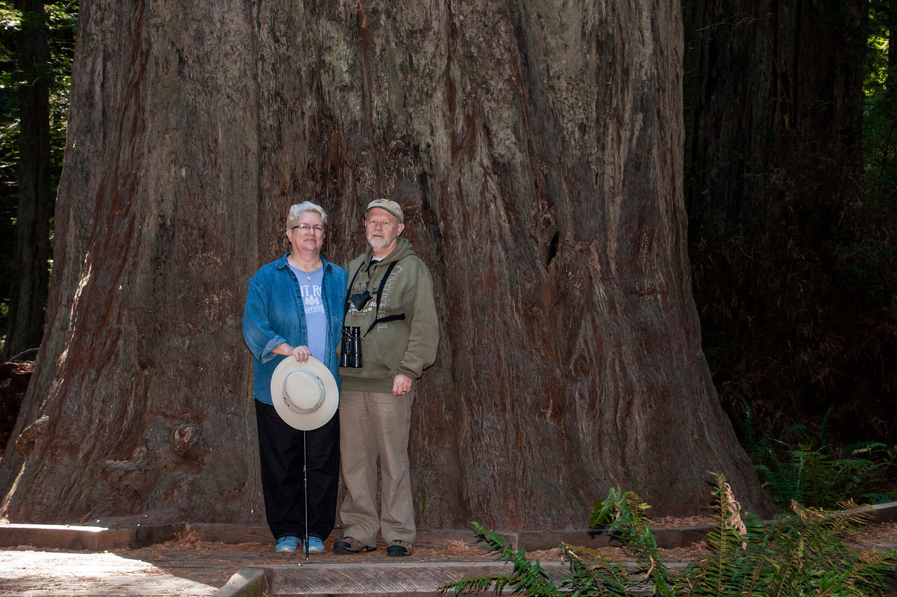 When we drove along the California coast, we especially wanted to see the Redwood trees.  Diana and I visited Humboldt Redwoods State Park and had our photo taken at the base of one of these giants.  This gives some idea of just how large these trees are.
