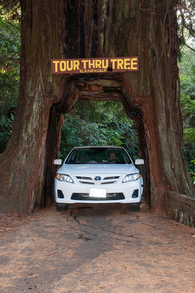 We also visited two places where we could drive our rental car through a hole cut in the base of a living Redwood tree.