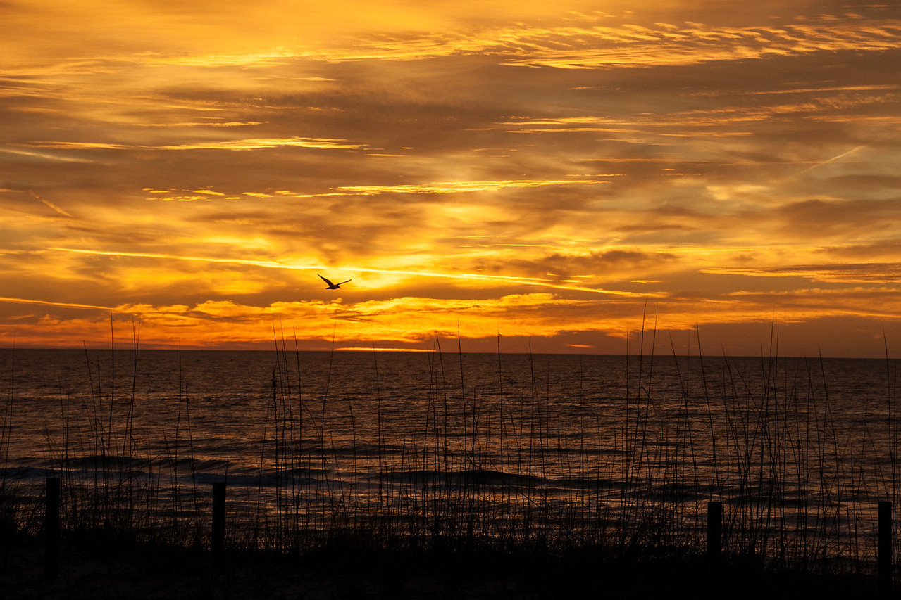 Here's a sunrise photo taken from the house we rent.  I did manage to get a bird (I think it's a Pelican) into this photo.