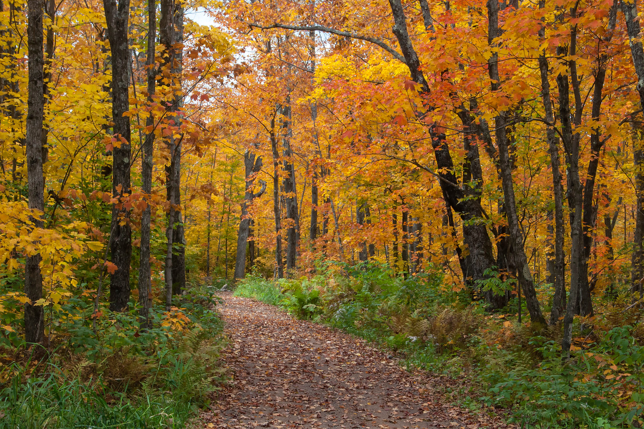 This is the start of a hiking trail near Finland, Minnesota.