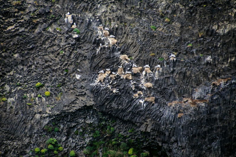 This is a typical nesting area for the Black-legged Kittiwakes I showed you last week.  They like steep, almost vertical, rocky cliffs along an ocean shoreline.  This photo was taken near the town of Vik, on the southern coast of Iceland.