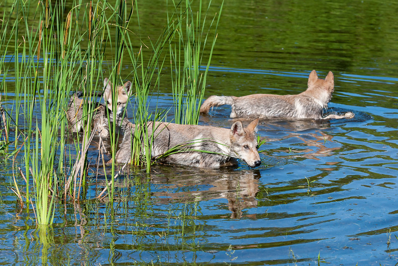 It was a pretty warm day so the pups were happy to go for a swim in the nearby pond
