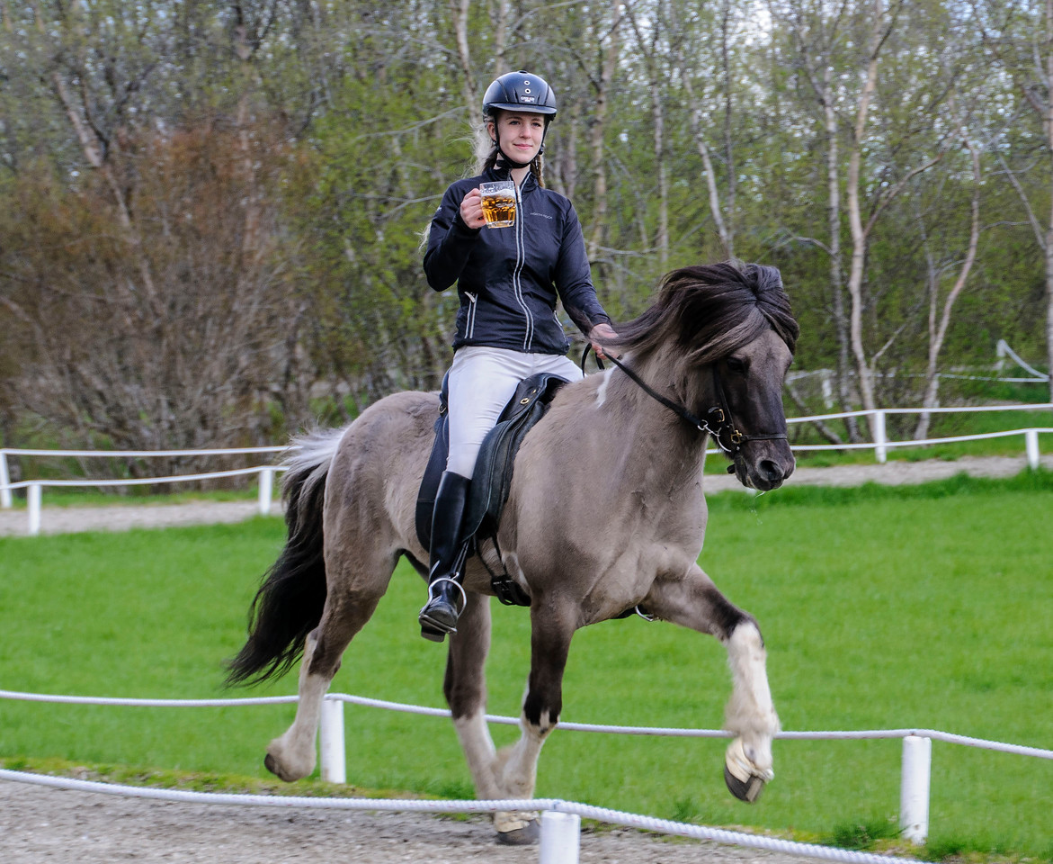 All horses can walk, trot, and canter.  The Icelandic Horse adds two more gaits: tolt and flying pace.  The tolt is especially smooth and was demonstrated for us by this rider.  She carried a mug of beer around the track without spilling any of it.
