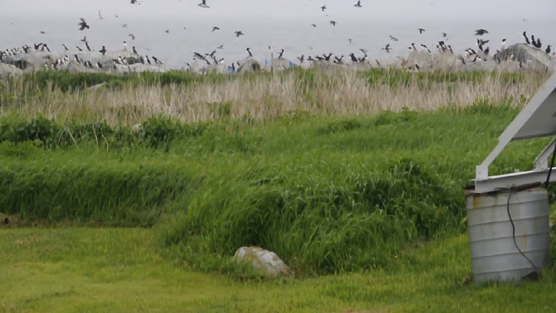 Here's a video of the action we saw from the blind.  Make sure your sound is turned up, then click the camera icon in the lower left of the photo.  It was very windy so there is some wind noise, but you can still hear the birds calling.