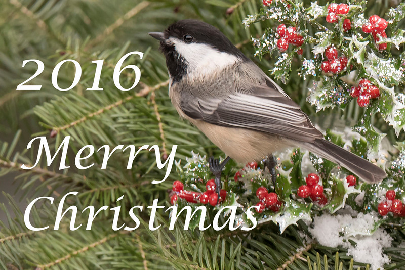 I've enjoyed sharing my photos with you this year.  Have a very Merry Christmas and a Happy New Year