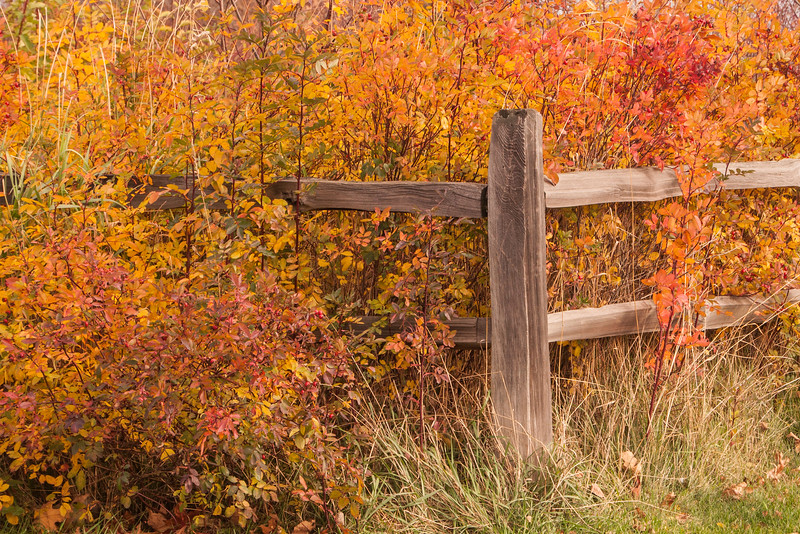 I still have a few more fall photos to share with you.  These colorful shrubs were growing near a picturesque fence railing in Grand Marais, Minnesota.