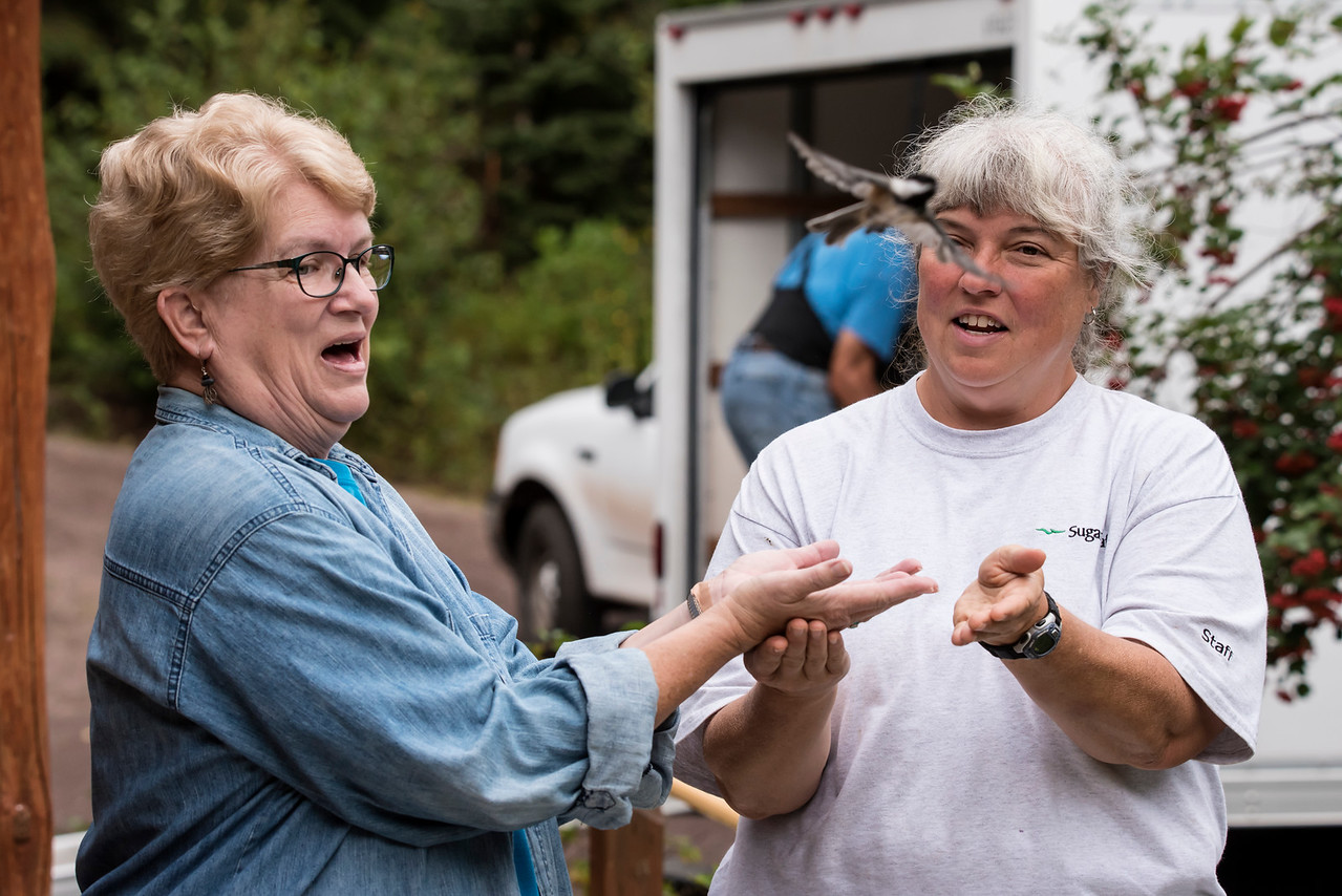 When Diana and I visited Sugarloaf Cove, we watched a bird banding session.  A group of dedicated birders does this on Saturday mornings from spring through fall.  Diana (on the left) was delighted to release one of the banded Chickadees.  You can see it flying away near the top of the photo.