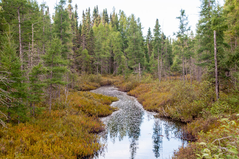 I like to go birding on lightly travelled gravel roads when we visit the North Shore.  Spectacular scenes like this are common in these undisturbed areas.  This photo was taken from the General Grade Road and shows the west branch of the Baptism River.