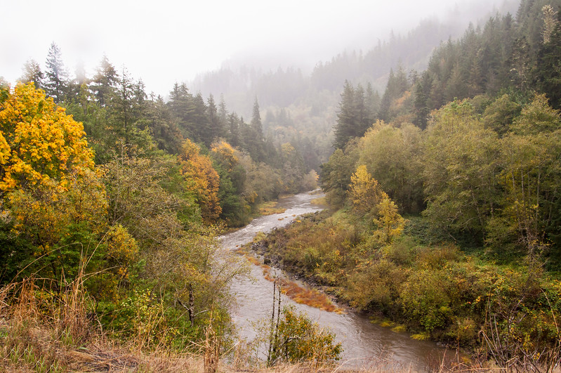 During our travels around Oregon, we came across this lovely mountain stream.  It was rainy and foggy that day, but even so, the changing colors of the leaves stood out against the green of the evergreen trees.