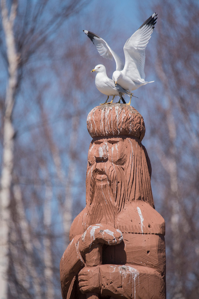 "I also checked out the boat landing in Two Harbors.  This Voyager statue is well ""decorated"" from the many gulls that land on its head."