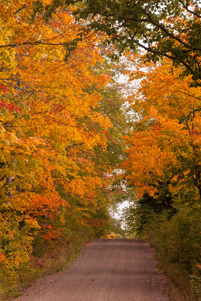 The fall colors were beautiful and this photo was taken along the Honeymoon Trail in Cook County.