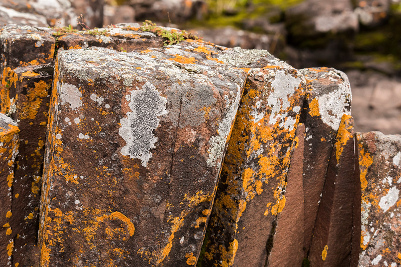 One day we went to Grand Marais.  The large rocks on the shore of the harbor have lichens growing on them.  Here is a close-up view showing the intricate patterns formed by the lichens.