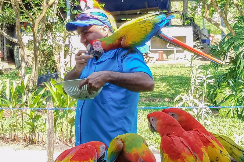 Here's Alex, one of our top-notch tour guides, feeding peanuts to the Macaws.