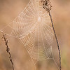 Some mornings here in Florida the humidity is almost 100% and dew settles on everything outside, including spider webs.  That makes the webs visible and shows the intricate weaving done by the spiders.  This photo was taken at St. George Island State Park.