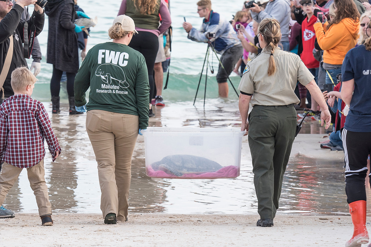 Our Park Ranger friend, Melody, (on the right) is helping take this turtle into the water.