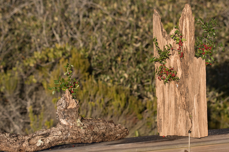I wanted to use local vegetation in my bird photos, so I added some red Yaupon berries to my two wooden perches.