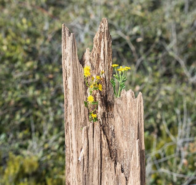 This piece of wood had some hidden nooks where I could put food to attract the birds.  I added some yellow wildflowers that were growing in the yard of the house we rented.