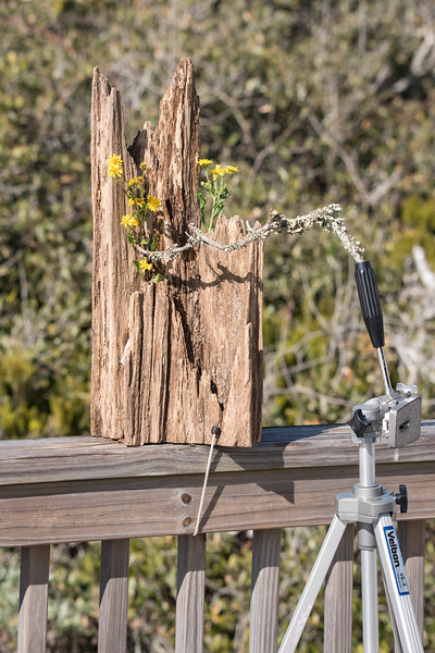 The piece of wood was held to the deck railing by a bungy cord.  Using an old tripod, I added a photogenic stick that the birds could perch on.