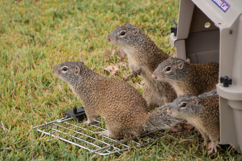 This photo made us think of four inmates breaking out of jail.  Eventually, all of the squirrels disappeared into the tall grass.  Mission accomplished!!