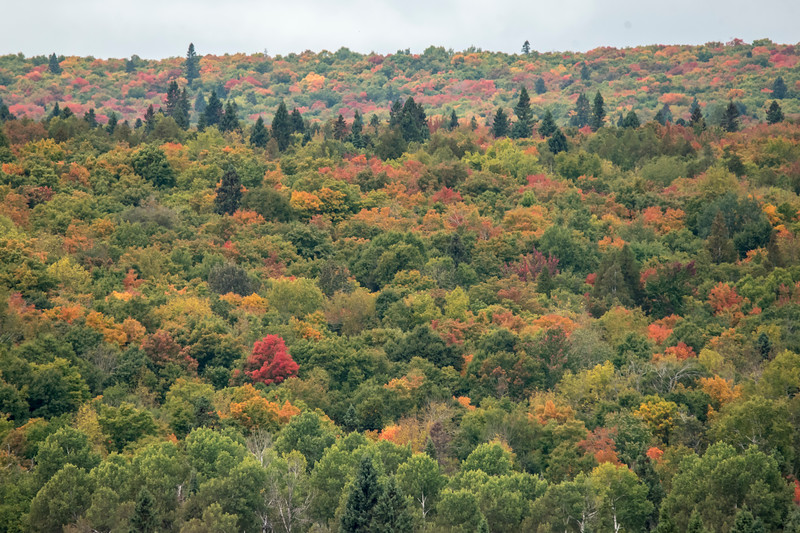 A panoramic view, like this one taken along the Sawbill Trail, shows trees in various stages of color change.  Both Diana and I were drawn to the brilliant red tree in the lower left of this photo.