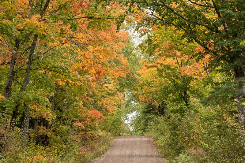We just returned from our annual trip to Minnesota's North Shore.  The fall color season has started but it hasn't reached its peak yet.  Here's a view of some colorful maples along the Honeymoon Trail in Cook County.