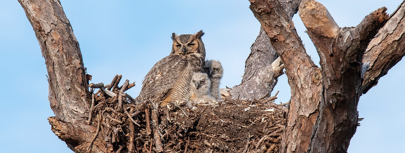 This is my favorite photo of the owl family.  We left Florida on March 2 so I didn't get to see the owls fully develop and fledge but it was great fun watching them grow up.