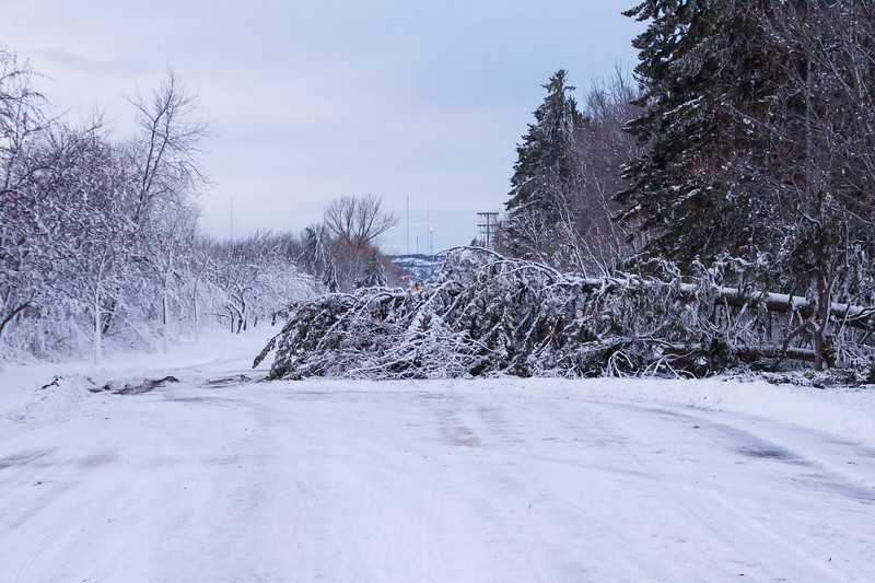 This tree actually succumbed to the wind and snow and left only a small path to drive around it.