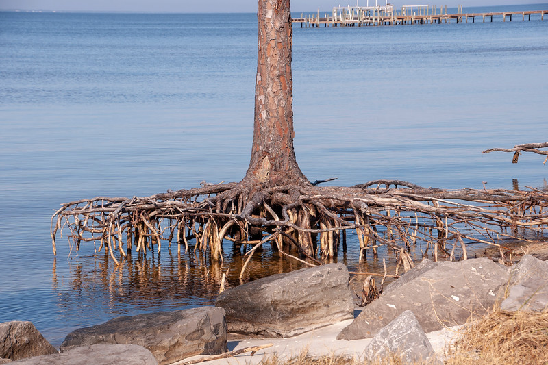 While we were driving around St. George Island, Diana and I saw this dead tree with its roots totally exposed.  All the sand surrounding the roots has been washed away.  This is an interesting look at how the roots of a tree develop and anchor it to the ground.