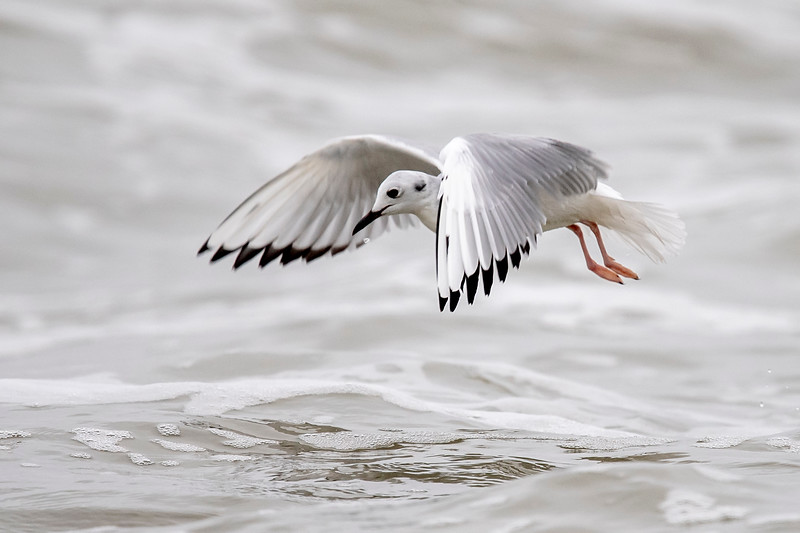 At times, they seem to hover just above the water as they search for small fish, insects, and other tiny sea creatures.