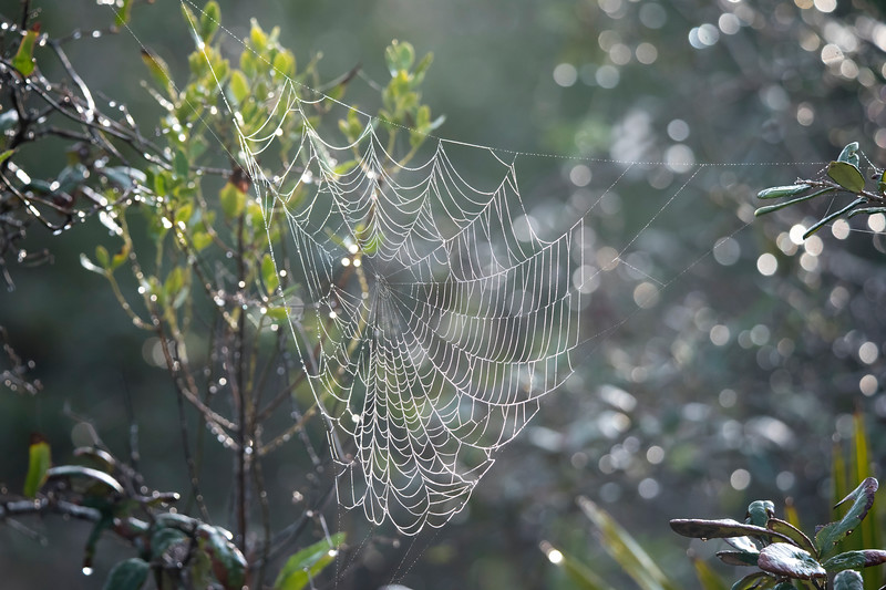 When we have a very humid morning, I look for spider webs like this one that are coated with dew.  It makes me appreciate all the work that spiders do to get their food.  It also makes me aware of all the webs that are around.