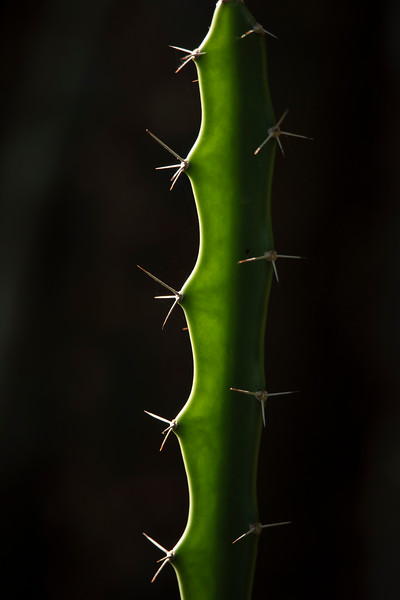 I liked the way the sun backlit this cactus plant along the wildlife drive at Ding Darling NWR on Sanibel Island.