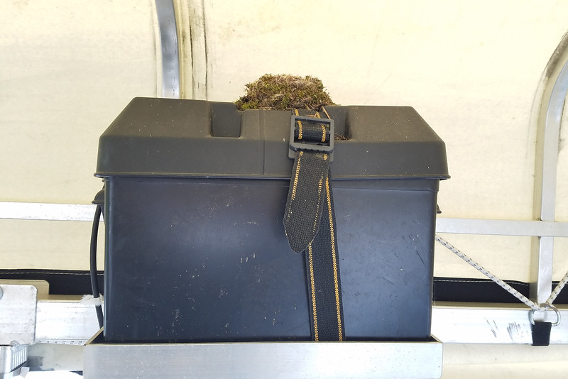 Usually they build the nest in a corner of the boat lift frame but this year they chose to put it on top of the battery box.  That meant the nest was right at eye level each time we took the boat out, giving us a front row seat to observe the entire nesting process.