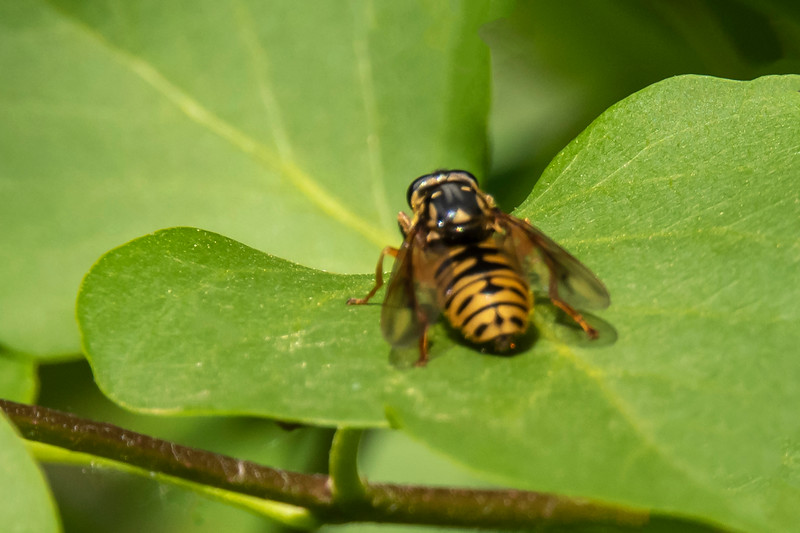 A wasp even showed up and landed on one of the Lilac leaves.