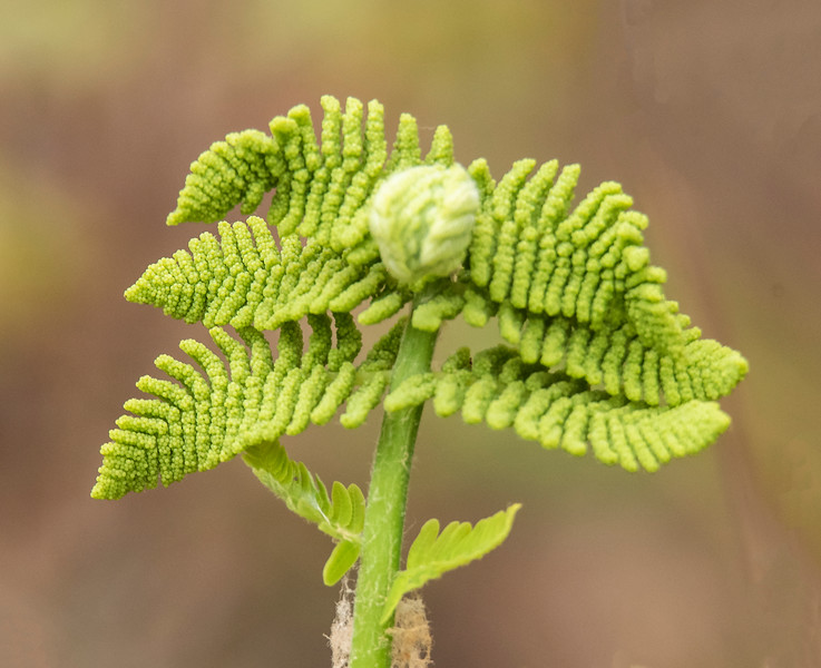 I also photographed this plant in the woods at Shawn's house and I'm not sure what it is.  It has a very interesting pattern and looks like it could be a fern of some kind.