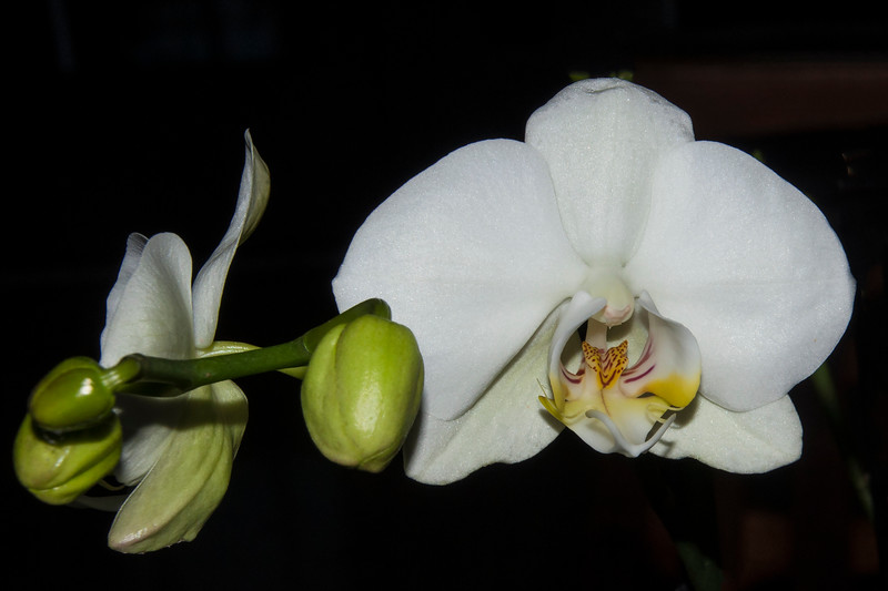 I'm always interested to see the different patterns in the center part of each variety of orchid.