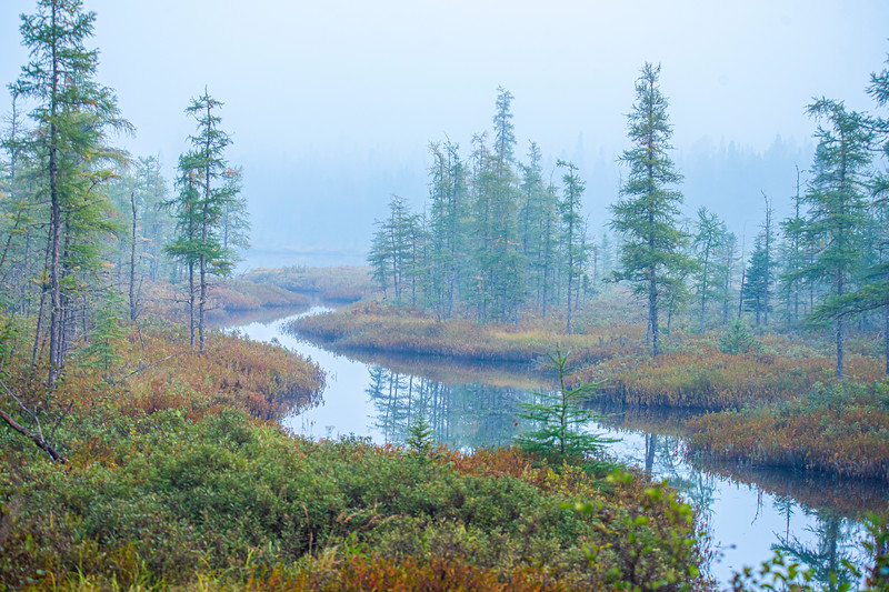 One foggy morning I was birding along the East General Grade Road and came across this picturesque little stream flowing through a bog.