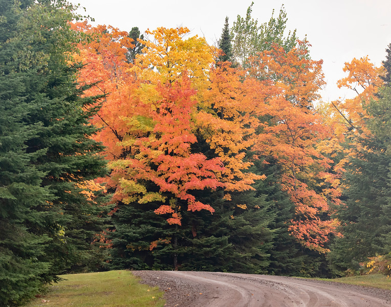 Lax Lake Road is another place where we found some boldly colored Maple trees.