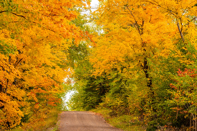 The Honeymoon Trail is about 10 miles inland from the shore of Lake Superior.  It runs through a forest that is mostly Maple trees.  Right now, their leaves are producing the brilliant yellow, orange, and red that we associate with fall colors.