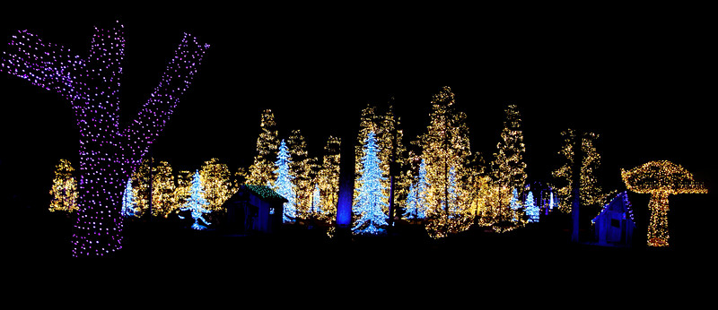 Here's a wide-angle shot showing a forest of lighted trees.  On the left is one of the many real fairground trees with its trunk wrapped in lights.