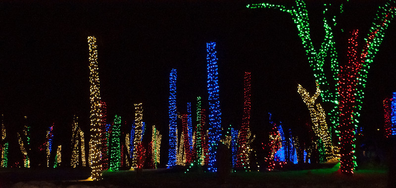 Tree trunks were wrapped with lights.  The lights stop at the point where branches start to grow.  That made the trees look like they were just tall stumps.