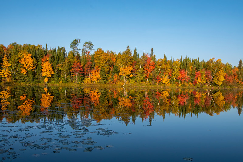 Two weeks ago, I showed you some fall color photos from the North Shore.  Here are some spectacular scenes from our lake home in northern Minnesota.  The red, orange, and yellow leaves were especially beautiful this year.