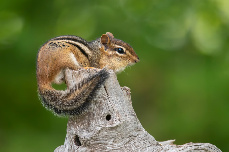 The nice thing about golden safflower is that squirrels don't like it.  So, even though the feeder is accessible to the squirrels, they just ignore it.  However, we do have a Chipmunk that fills its cheeks with seed and scampers off to store it for winter.